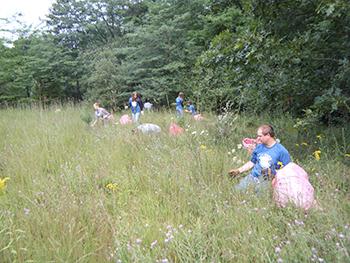 Group of volunteers remove invasive plants in field