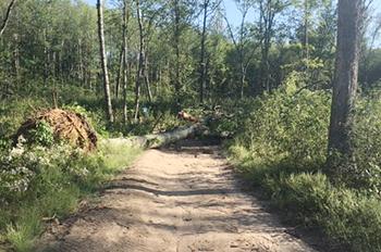 tree across trail