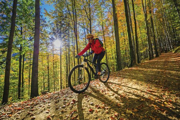 A cyclist in a red jacket travels downhill in a sunlit forest just starting to show hints of autumn color