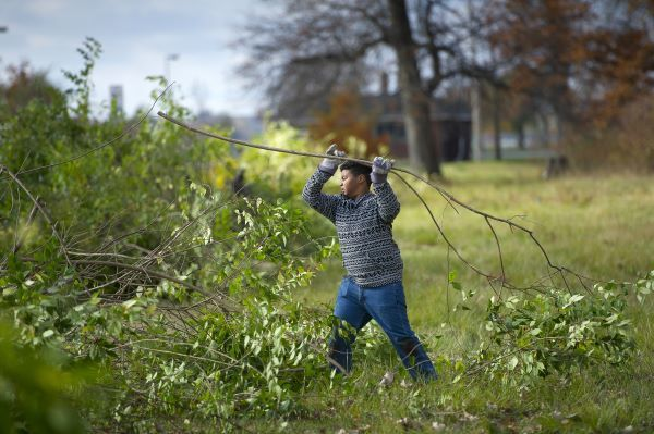 A man tosses a trimmed branch into a pile as part of an invasive species cleanup program