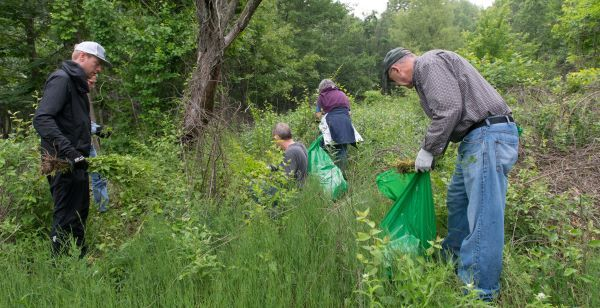 A group of volunteers with green bags removes invasive plants in a state park