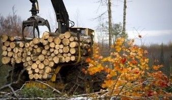 Logging equipment is used to pick up cut timber in a field starting to show autumn color