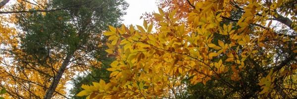 fall header 2