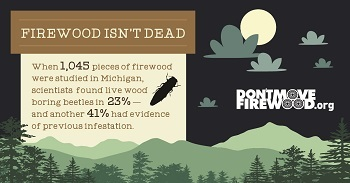 Infographic firewood isn't dead