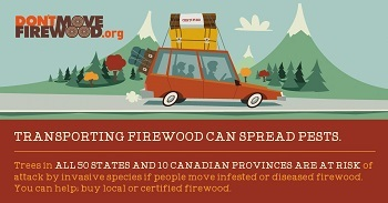 Infographic transporting firewood