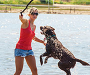 Bring Your Best Friend on These Pet Friendly Vacations in Michigan