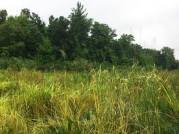 Stearn Creek