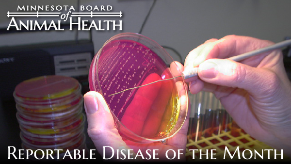 Minnesota Board of Animal Health Reportable Disease of the Month Header