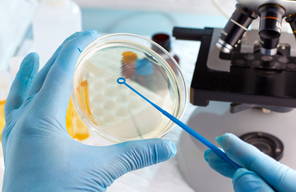 Laboratory petri dish testing bacteria