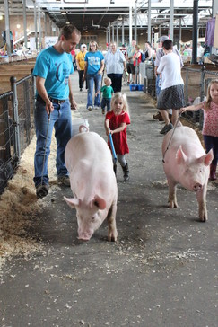 Man and girls walking pigs at the fair