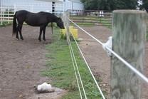 Horse along fenceline