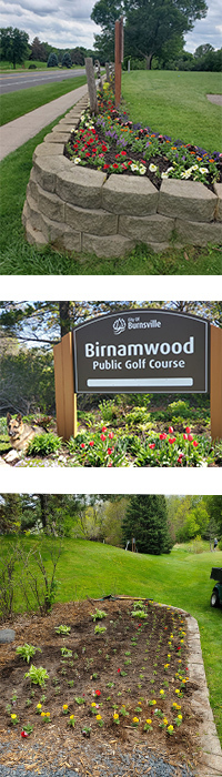 Three pictures of annual flowers planted at Birnamwood Golf Course