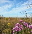 prairie in fall