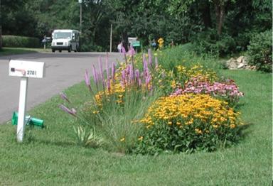 Maplewood rain garden example