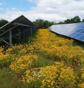 Solar panels in field of wild flowers
