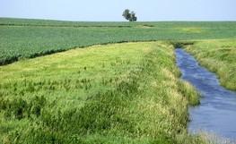 Ditch with grass buffer