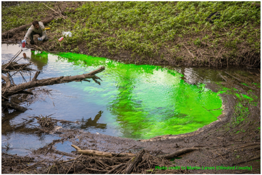 Photo of Bright Green Dye being added to stream