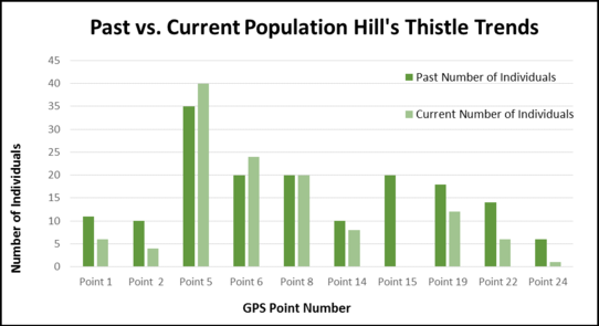 Hill's thistle population comparison chart