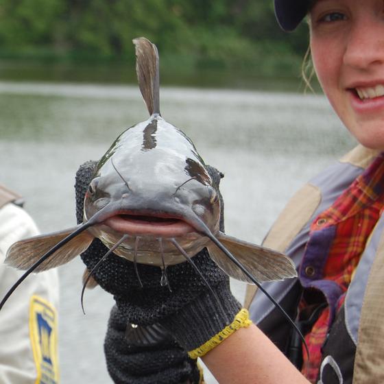 catfish close up
