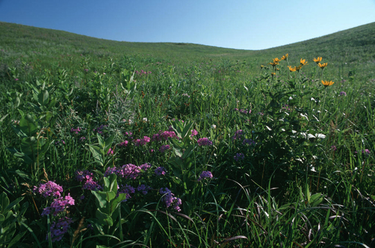 Prairie Coteau Scientific and Natural Area
