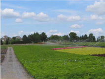 Irrigation of small field near homes