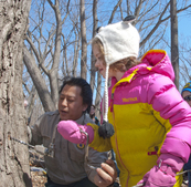 naturalist with girl tapping maple tree
