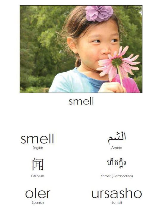 smell in many languages