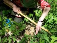 foraging morels