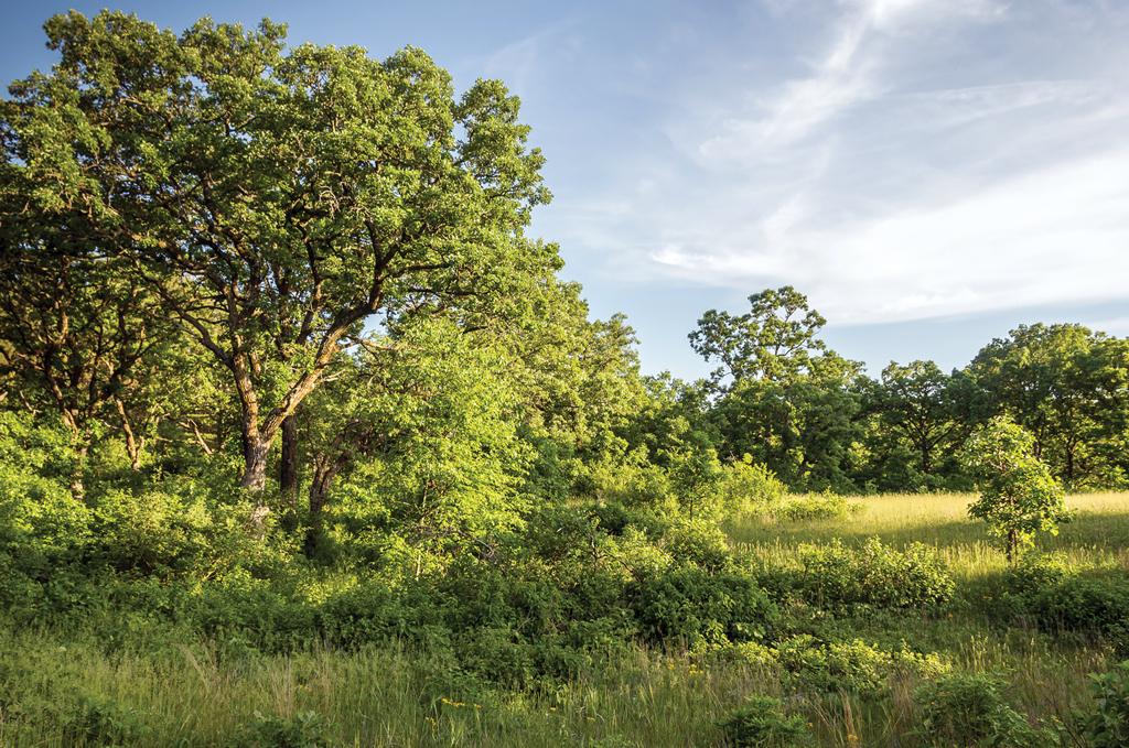 Oak savanna at Uncas Dunes Scientific and Natural Area