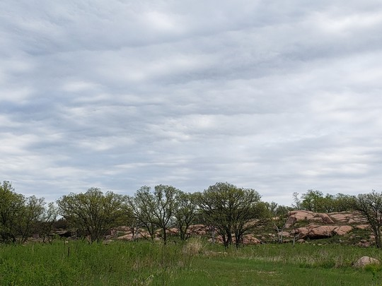 Oak trees and rock barrens at Swedes Forest SNA