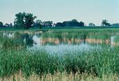 Wetlands - USFW
