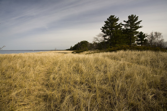 tall pine trees and beach grass on the edge of a lake