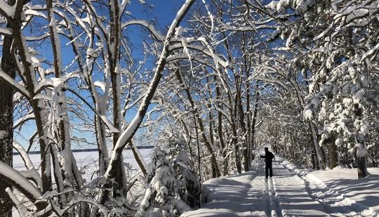 Ski trail with tree canopy