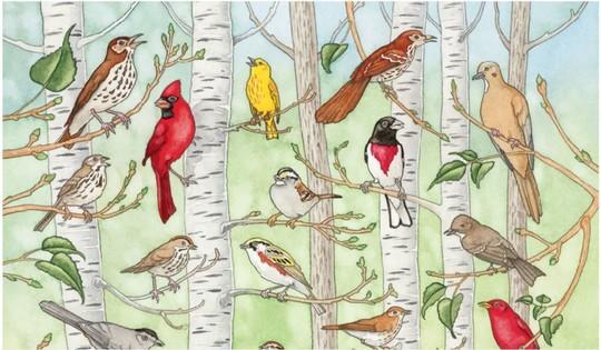 Interactive bird song poster