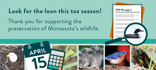 Look for the loon this tax season