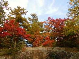 Colorful trees in the fall