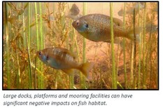 """Fish underwater with aquatic vegetation & label """"Large docks, platforms and mooring facilities can have significant negative impacts on fish habitat."""""""