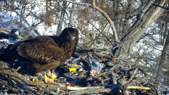 juvenile visits nest E2?