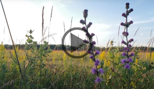 Image of prairie with flowers in the foreground and video play button image