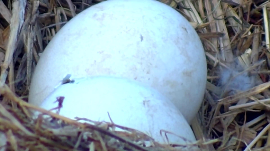 peep on front egg 3-25-2021