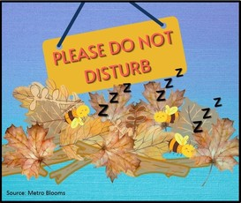 Please Do Not Disturb sign over bees sleeping in leaf debris
