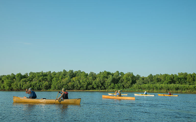 Group of canoes in river