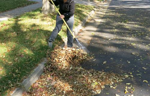 Raking leaves in street