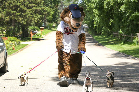T.C. Bear walking some dogs for the Step To It Challenge