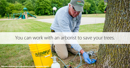 Work with an aborist to save your trees