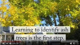 Learning to identify ash trees video