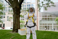 Bees being rescued at the Government Center