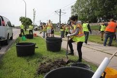 Volunteers planting trees on Hiawatha Ave