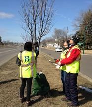 Tree steward volunteers practice pruning