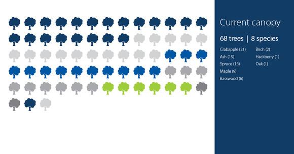 St. Anthony tree planting diversity before